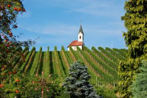 Et kapell midt blant vinranker i St. Stefan, Østerrike.