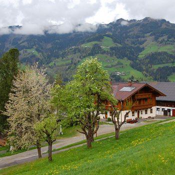 Våryr - St. Johann im Pongau, Salzburgerland, Østerrike