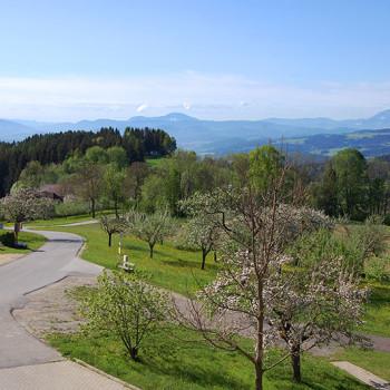 Våryr - Blomstrende trær St. Margarethen, Kärnten, Østerrike