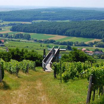 vinferie, Eisenberg, Burgenland, Østerrike
