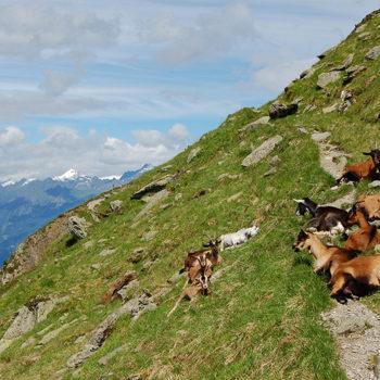 Jaufenpass, Wipptal, Syd-Tirol, Italia