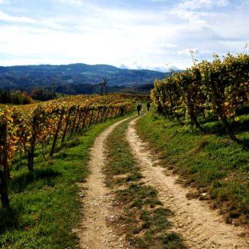 Vinvandring i Südsteiermark, Steiermark, Østerrike