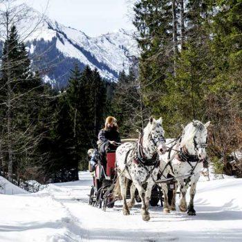 Hest og slede, Kleinwalsertal, Vorarlberg, Østerrike