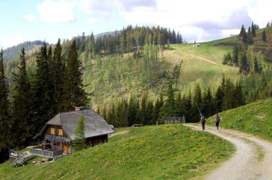 Panoramavandring ved Brunnalm, Steiermark, Østerrike