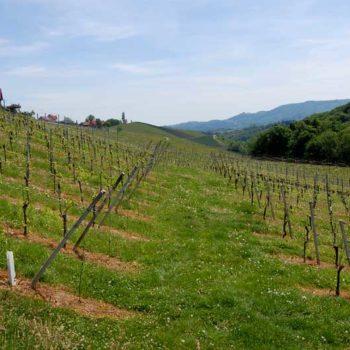 Vinvandring gjennom vingårder i det sørlige Steiermark, Østerrike