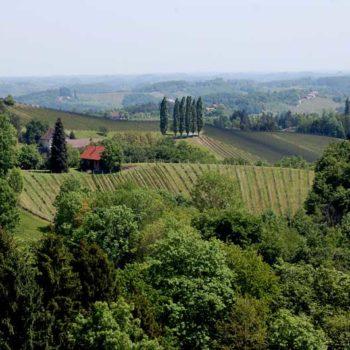 Herlig utsikt til vingårder i det sørlige Steiermark, Østerrike
