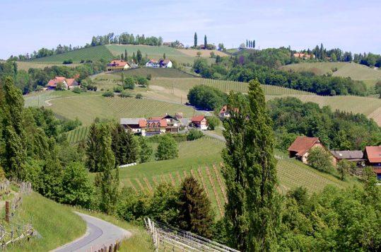 Vandring på Glanzer Weintour med utsikt til vinbergene i det sørlige Steiermark, Østerrike