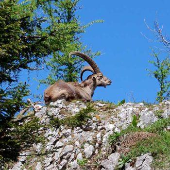 Vandring fra Teichalm til Hochlantsch, Alemnland, Steiermark, Østerrike