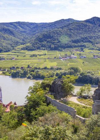 Vinsmaking i Wachau, Niederösterreich, Østerrike