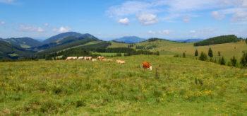 Utsikt til beitemarkene ved Sommeralm, Steiermark, Østerrike