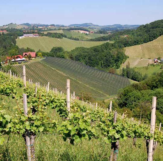 Vinmarker langsmed Südsteiermark Weinstrasse, Østerrike